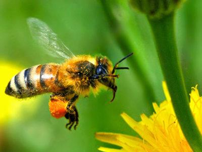 Vojo Brstina je pčelar i pronalazač u svetu pčelarstva