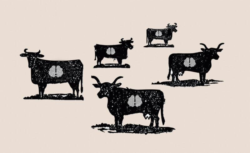 Brendiranje - utisnuti znak vlasnika na stoci